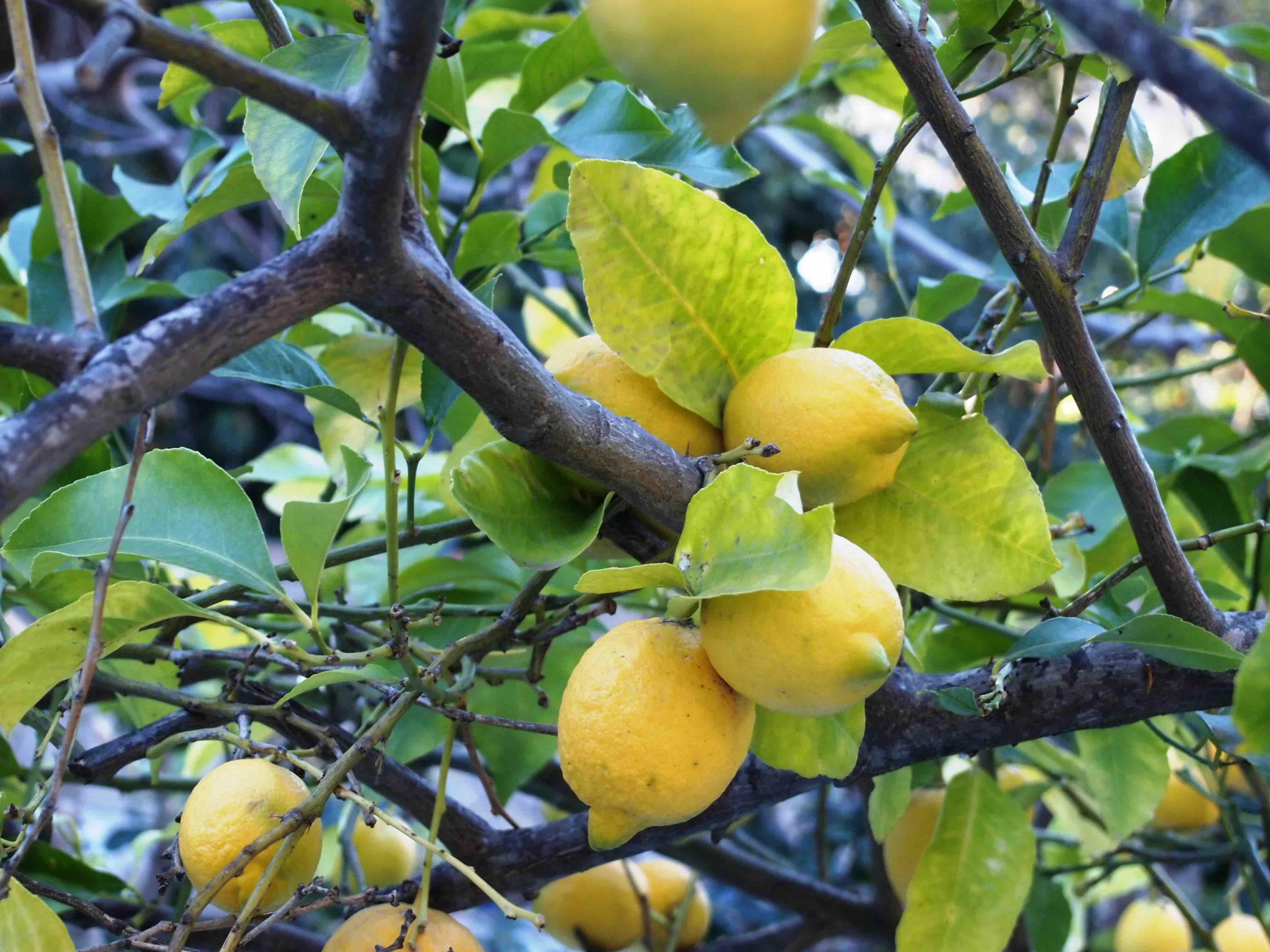 Gener  2020 Usos medicinals i culinaris de les plantes que tenim al hivern en el nostre entorn