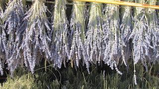 AGOSTO 2018-  Plantas aromáticas y cosmética natural