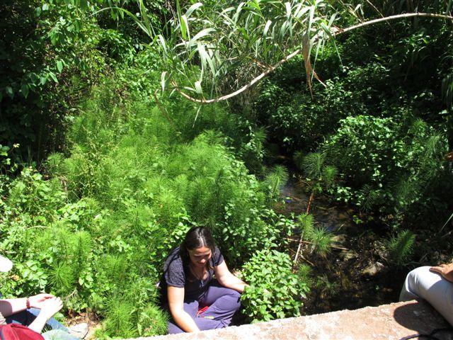 SETEMBRE 2021 Passeig sensitiu pel bosc. Connexió amb el bosc a traves dels sentits