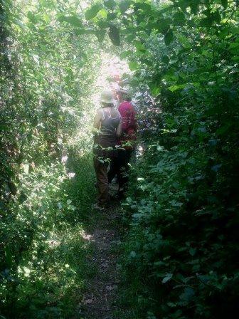 NOVEMBRE 2021 Passeig sensitiu pel bosc. Connexió amb el bosc a traves dels sentits