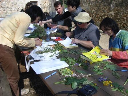 Maig  2019 Usos medicinales y  culinarios  de les plantas  de nuestro entorno durante la primavera