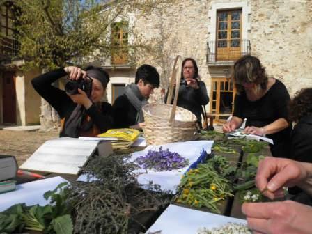 Maig 2019 - Usos medicinals i culinaris de les plantes del nostre entorn